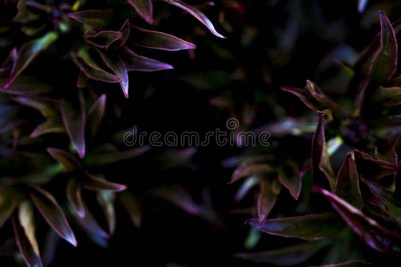 Colorful plants in a garden royalty free stock images