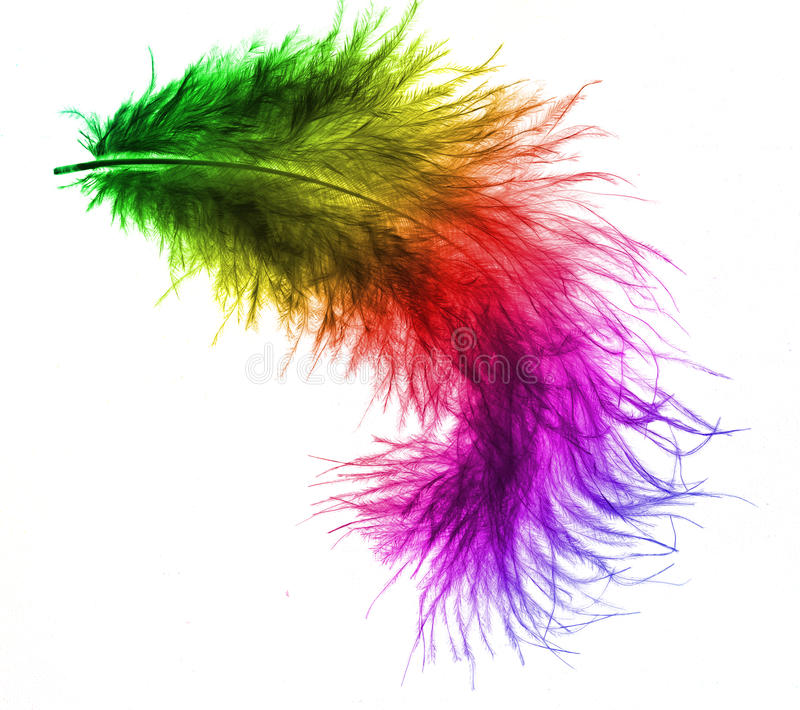 Colorful plume. With white background royalty free stock image