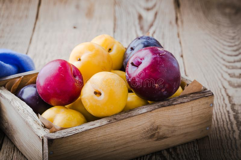 Colorful plums, fresh summer fruits stock image