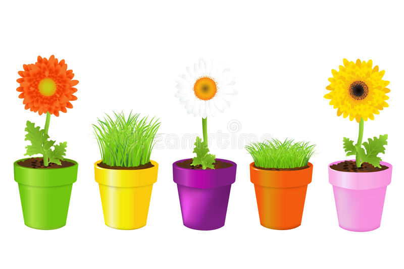 Colorful Pots With Daisies And. Vector vector illustration