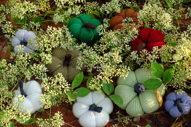 Colorful pumpkin in garden, handmade product by knit. Group of colorful pumpkins in garden, grass land with tiny flowers in white, handmade products for leisure stock photography