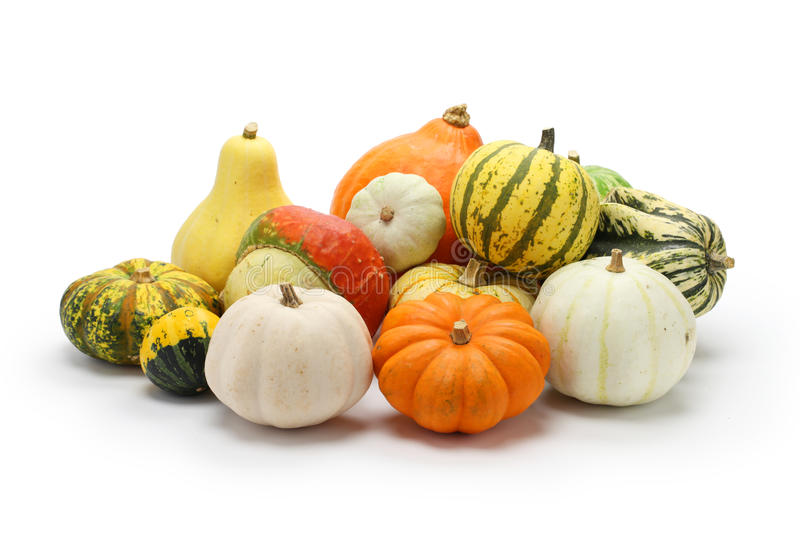 Colorful pumpkin and squash collection. Autumn background stock photos