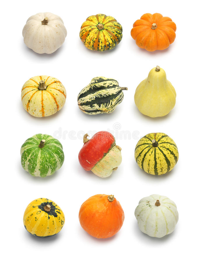 Colorful pumpkin and squash collection. Halloween background parts stock image