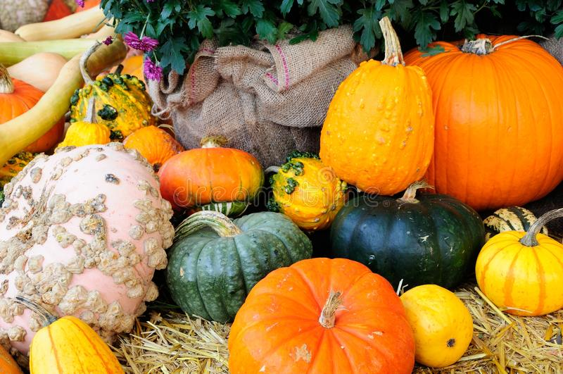 Colorful pumpkin royalty free stock images