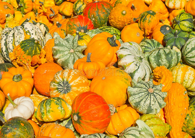 Download Colorful Pumpkins Stock Images - Image: 21106164