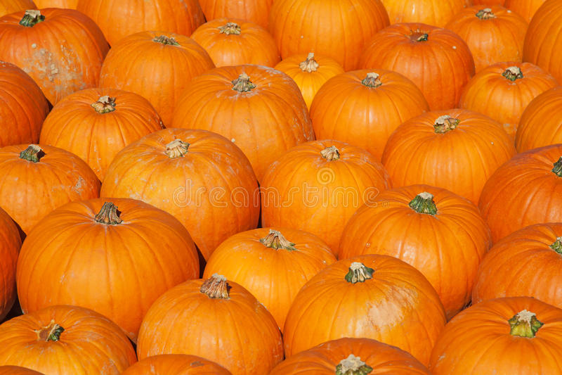 Download Colorful pumpkins stock photo. Image of fresh, market - 21504788