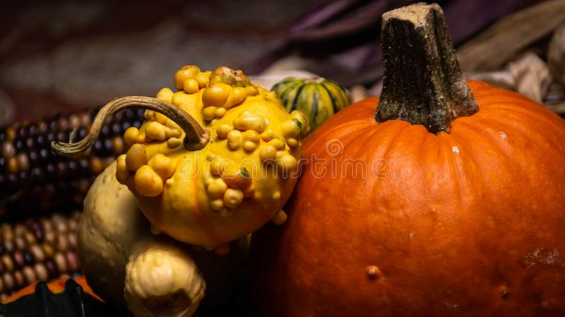 Colorful pumpkins, bumpy gourds, beautiful squash, and flint corn lie on a table during autumn. stock photos