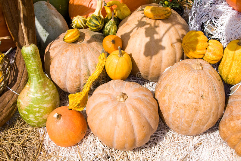 Download Colorful Pumpkins Collection Stock Photo - Image: 19844668