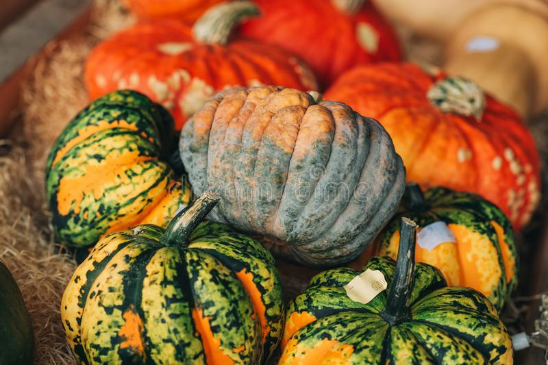 Colorful pumpkins collection. On the autumn market stock images