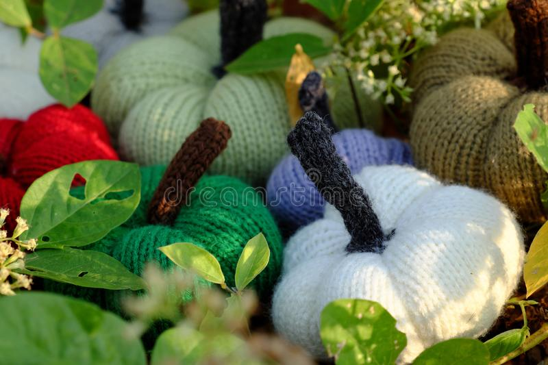 Colorful pumpkins in garden, handmade products by knit. Group of colorful pumpkins in garden, grass land with tiny flowers in white, handmade products for royalty free stock image