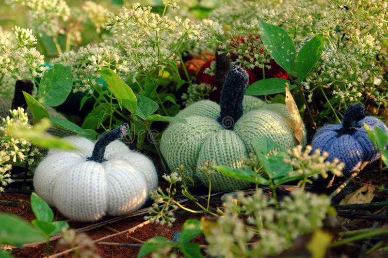 Colorful pumpkins in garden, handmade products by knit. Group of colorful pumpkins in garden, grass land with tiny flowers in white, handmade products for stock photography