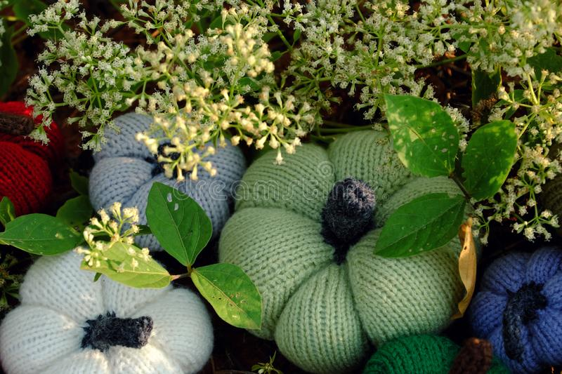 Colorful pumpkins in garden, handmade products by knit. Group of colorful pumpkins in garden, grass land with tiny flowers in white, handmade products for royalty free stock photography