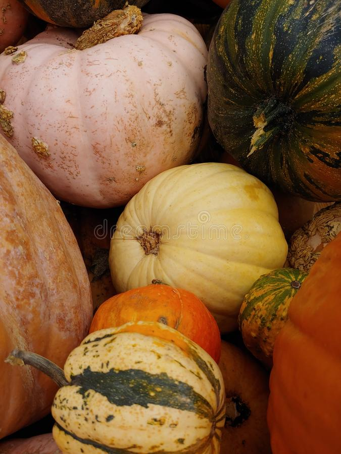 Colorful pumpkins and gourds piled on top of eachother for Halloween. royalty free stock photo
