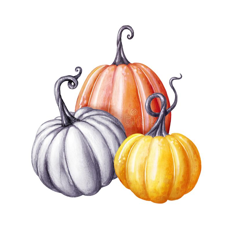 Colorful pumpkins, Thanksgiving watercolor illustration, autumn harvest, botanical fall decor, festive clip art isolated on white. Background vector illustration