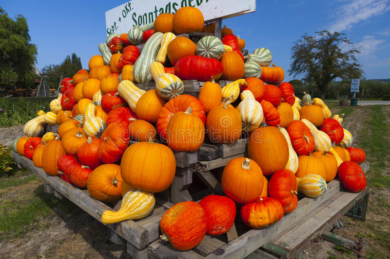 Download Colorful Pumpkins On A Tractor Trailer Stock Photo - Image: 39134866