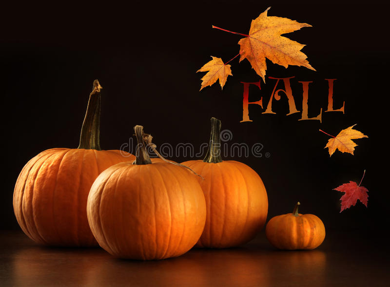 Colorful pumpkins on wood table on dark royalty free stock photos