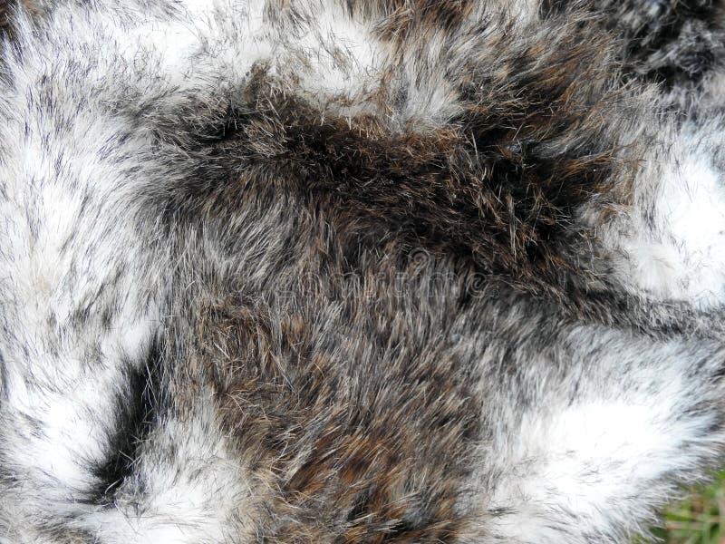 Colorful rabbit fur stock photo