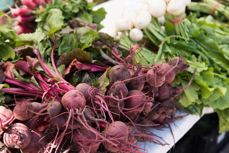 Colorful radishes at farmers market stock photography