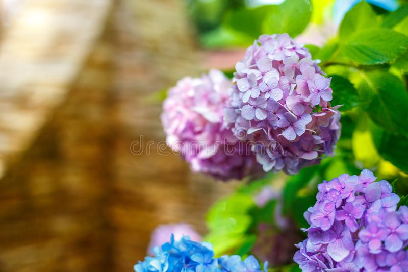 Colorful rainbow flowers of bright color, beautiful background stock images