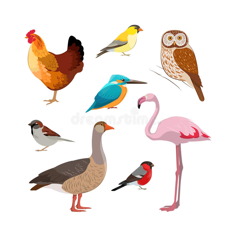 Colorful realistic bird collection vector illustration