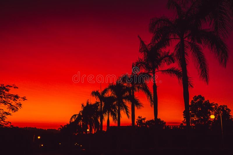 Colorful red bright sunset or sunrise with palms in tropics royalty free stock photo