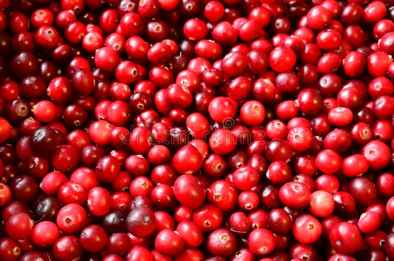 Colorful red cranberries background lying on the surface royalty free stock photo