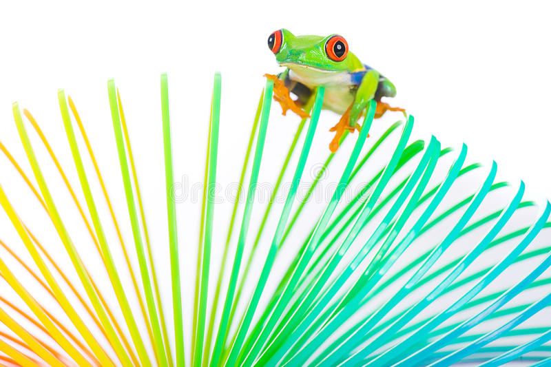 Colorful red eyed tree frog on a toy stock image