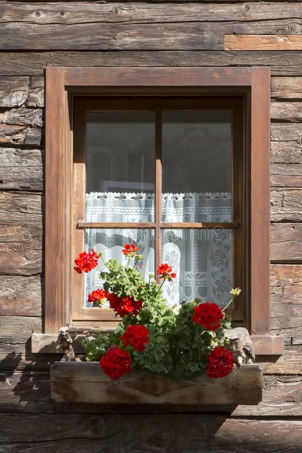 Colorful red geraniums in a window box royalty free stock image