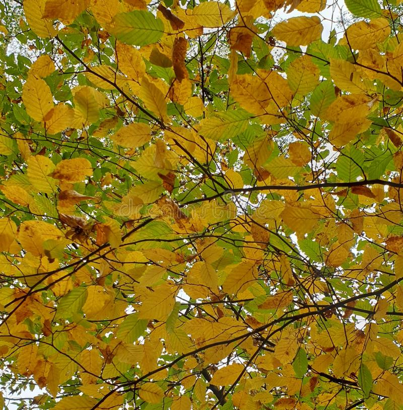 Red and orange autumn leaves. Colorful red and orange autumn leaves royalty free stock photography