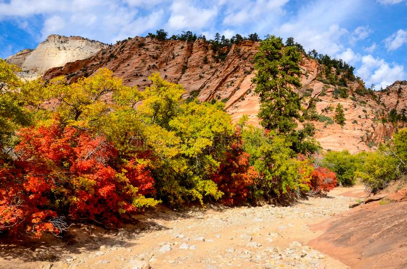 Colorful red and yellow autumn foliage in a colorful red rock desert landscape royalty free stock image