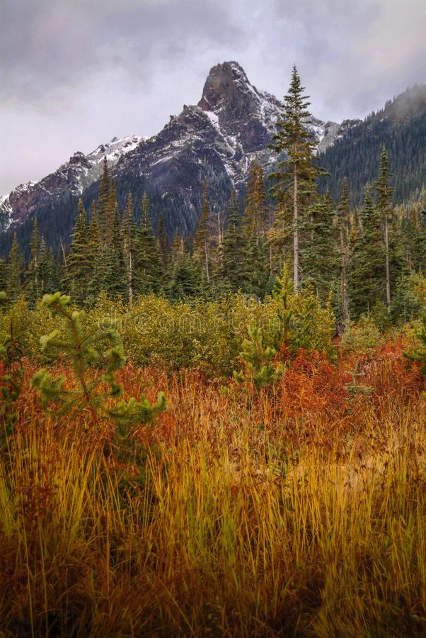 Forest in Autumn Mountains. A colorful regenerated clearcut in the mountains is displayed in this image. The snow in the mountains provides a nice contrast stock images