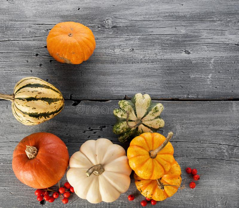 Colorful ripe pumpkins on wooden background with copy space for text on thanksgiving holiday or autumn seasonal background, flat stock photography
