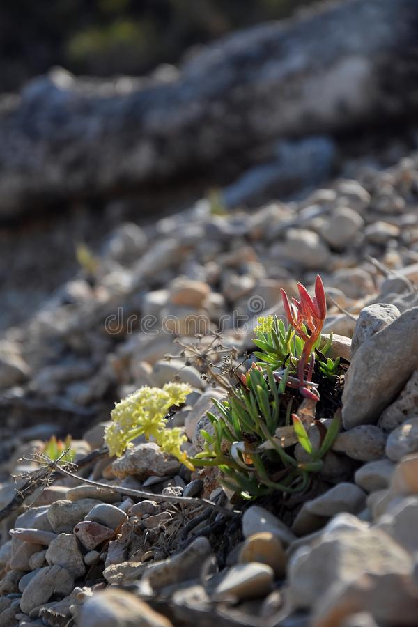 Colorful rockery plants on stony ground royalty free stock photography