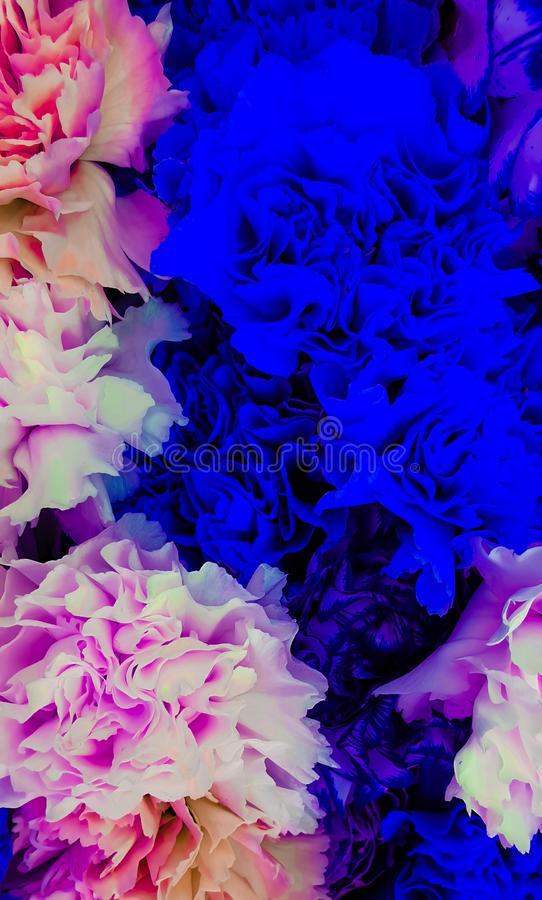Colorful romantic fluorescent flowers. Colorful romantic fluorescent flower arrangement royalty free stock photo