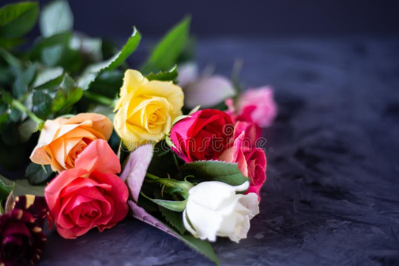 Colorful roses on grey/black background, with copy space royalty free stock photo