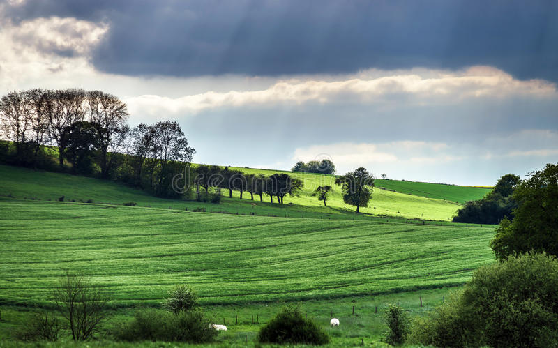 Colorful rural landscape with green fields stock photography