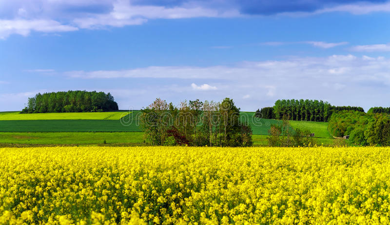 Colorful rural landscape with yellow bittercress fields stock photo