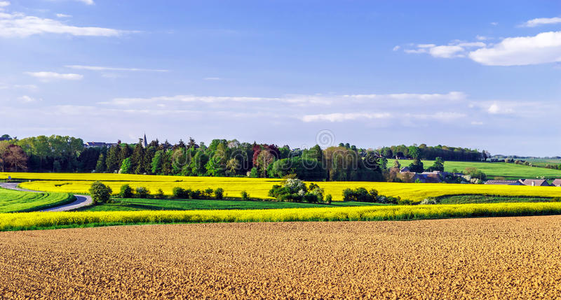 Colorful rural landscape with yellow bittercress fields. Belgium stock image