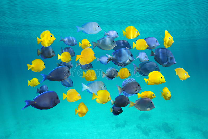 Colorful school of tropical fish below surface stock photo
