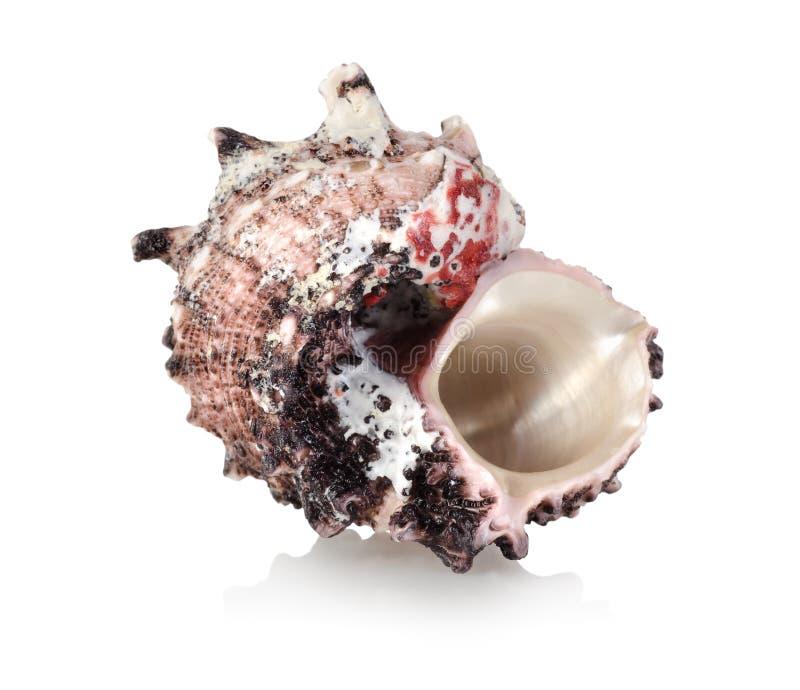 Colorful sea shell stock image