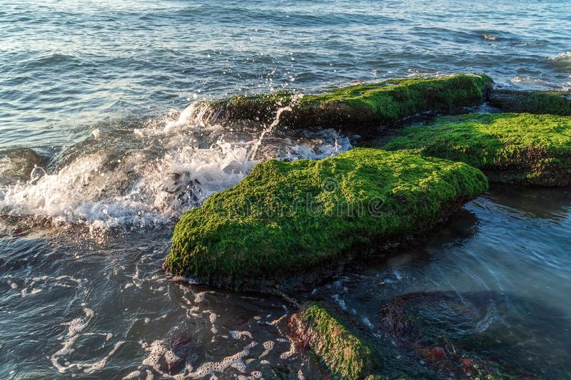 Colorful sea shore with green algae, splashing waves. Scenery royalty free stock images
