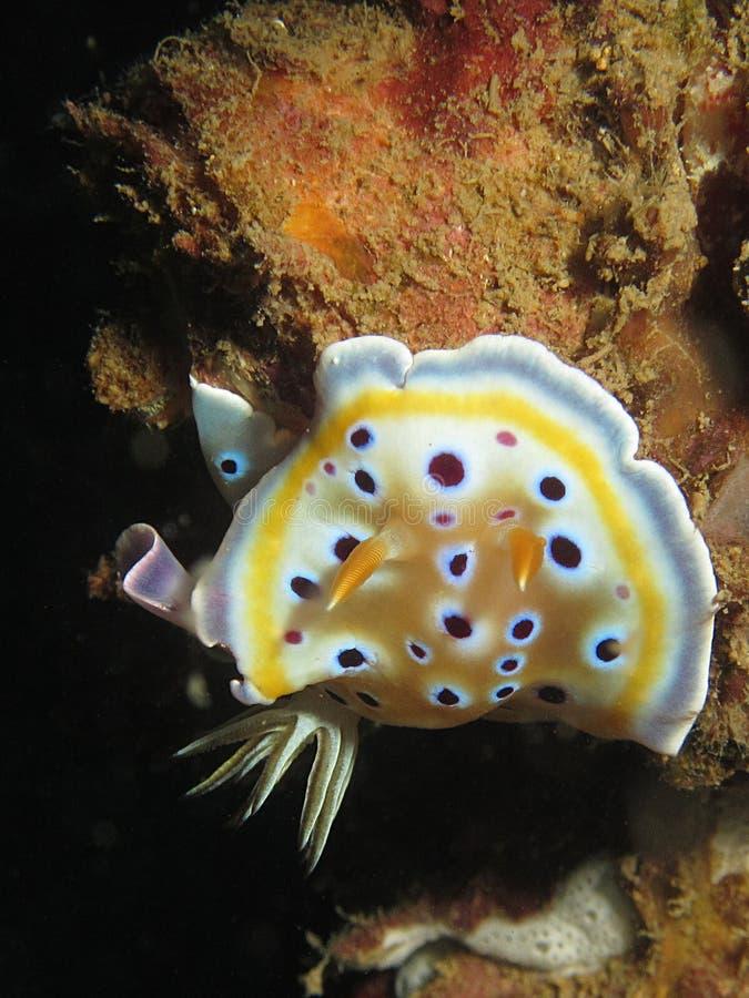 Colorful sea slug stock photography