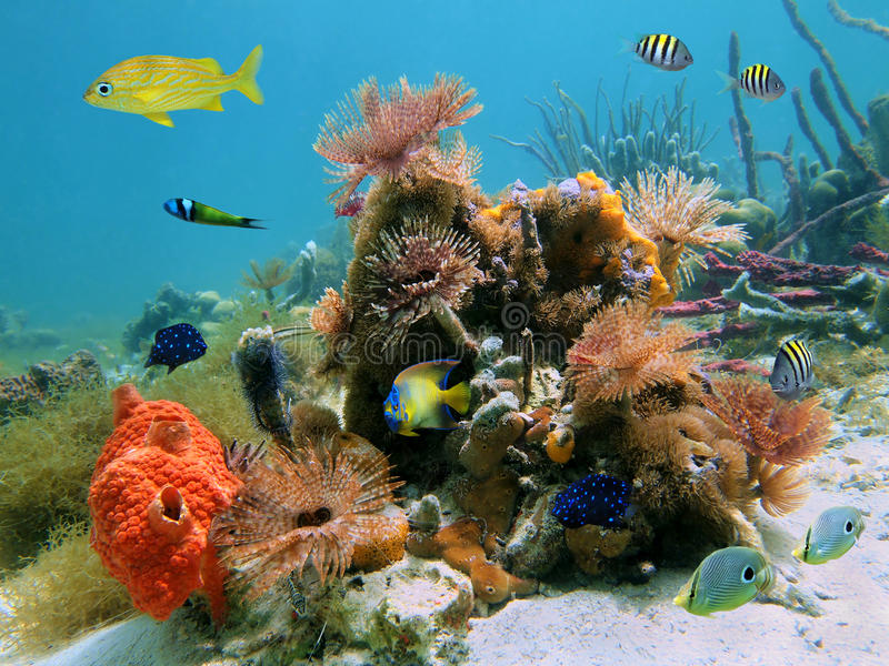 Colorful sealife. Underwater scene with colorful tropical sealife in a coral reef stock photo