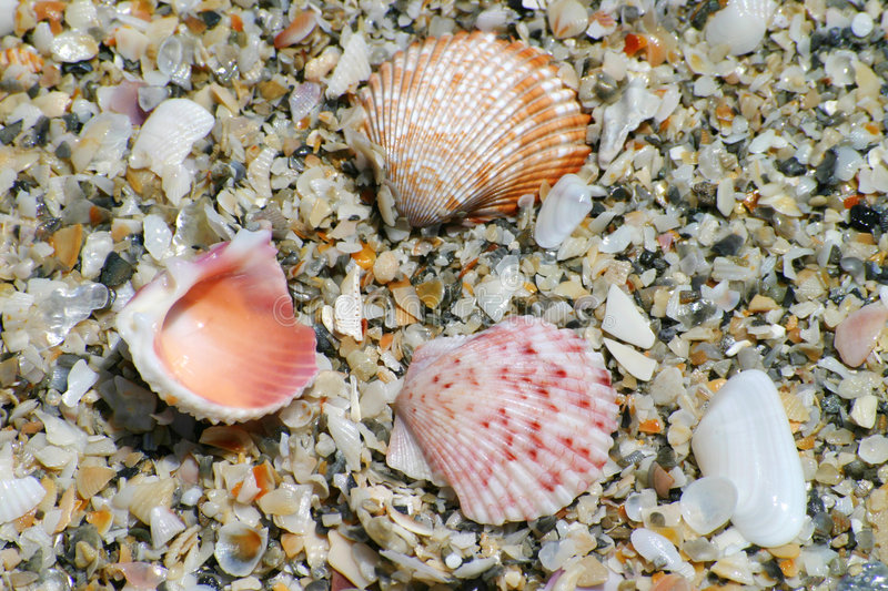 Colorful Shells on Beach royalty free stock photos