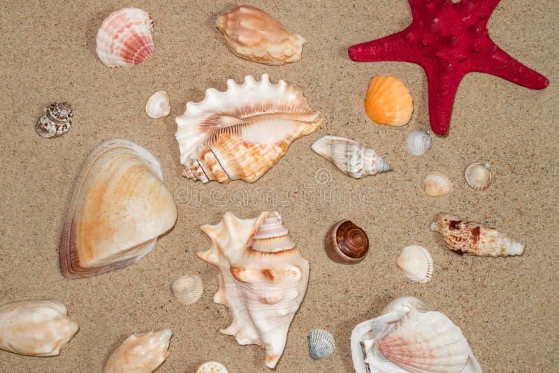 Colorful shells of marine mollusks on yellow sea sand. Colorful shells of marine mollusks on the sea sand stock photos