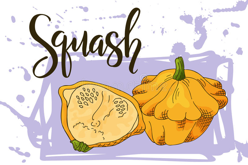 Colorful sketch vegetable. Healthy food poster. Farmers market design with squash. Vector illustration. Colorful sketch vegetable. Healthy food poster Farmers stock illustration