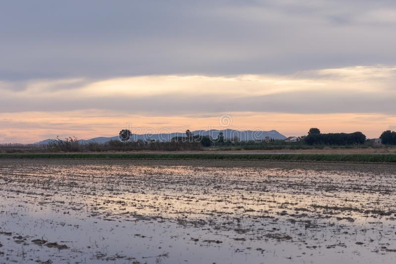 The colorful sky with clouds is reflected in the water over the rice field in the natural park of Albufera, Valencia, Spain. Ideal royalty free stock image