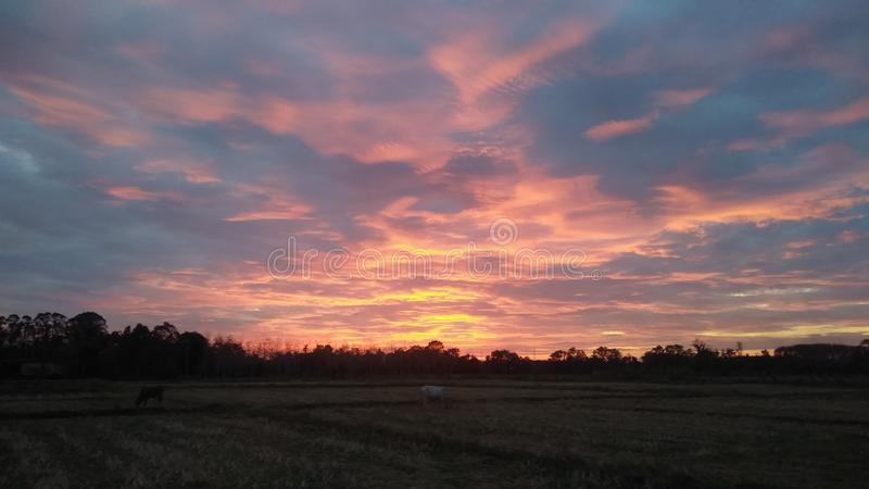 Colorful sky in rice field stock images