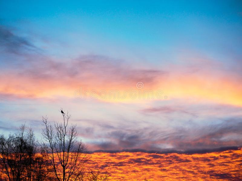 Download Colorful sky at sunrise stock photo. Image of leafless - 105263366