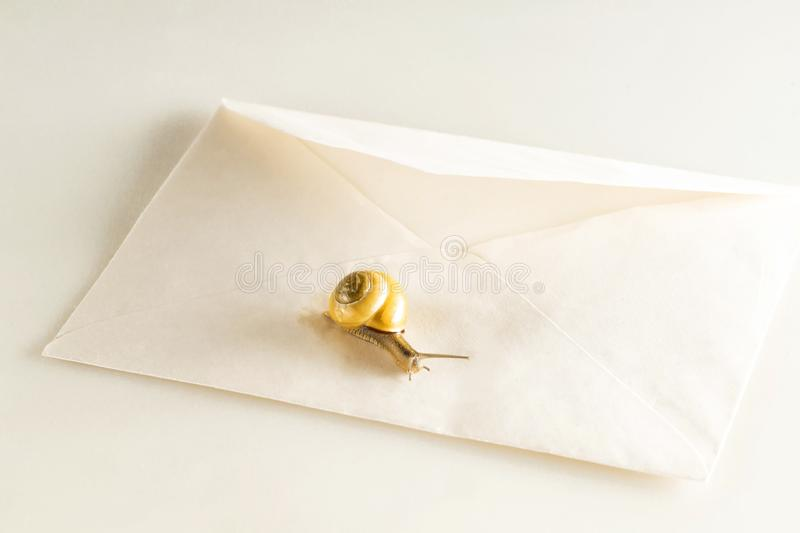 Snail on a mail envelope on a white  background royalty free stock photo